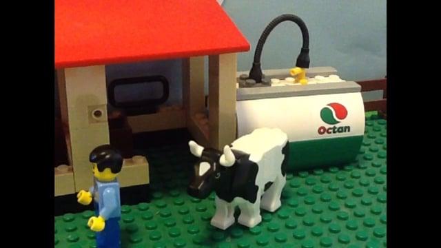 Koen med hul i ryggen