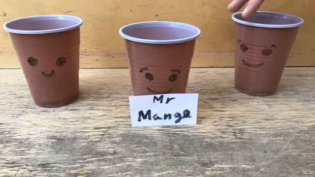Mr. Mango